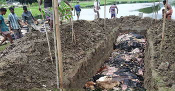 জগন্নাথপুরে ৯শ'টি পশুর চামড়া পুঁতে ফেলা হয়েছে