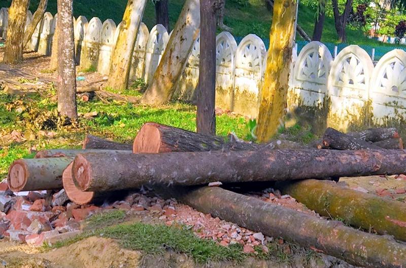 সিলেটের শাহী ঈদগাহে উন্নয়নের নামে চলছে বৃক্ষনিধন