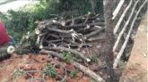 দখল হয়ে যাচ্ছে নগরীর সৈয়দানিবাগের ব্রিটিশ আমলের দীঘি
