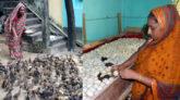 হাঁসের হ্যাচারীতে স্বাবলম্বী ছাতকের রোপেজুন নেছা