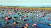 পর্যটন সম্ভাবনার নতুন অধ্যায় গোয়াইনঘাটের 'বুগইল বিল'