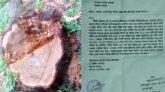বিশ্বনাথে প্রবাসীর বিরুদ্ধে সরকারি ভূমি থেকে গাছ কেটে নেওয়ার অভিযোগ