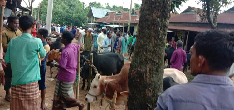 তাহিরপুরে অবৈধ হাটে ভারতীয় গরু, করোনা আতংক