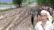 জৈন্তাপুর সীমান্তে আসছে বেন্ডিস করিমের নেতৃত্বে চোরাচালান: রাস্তা এখন ক্ষেতের জমি