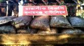 সুনামগঞ্জ সীমান্তে একদিকে সালিশ অন্যদিকে কয়লা আটক