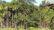 গোয়াইনঘাট সীমান্তে ভারতীয় খাসিয়ার গুলিতে বাংলাদেশী যুবক আহত