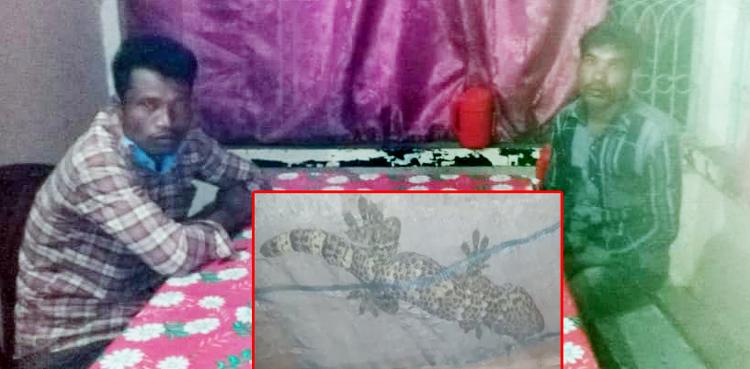 সিলেটে তক্ষকসহ দুই জনকে আটক করে ছেড়ে দিলো পুলিশ, তক্ষক গায়েব