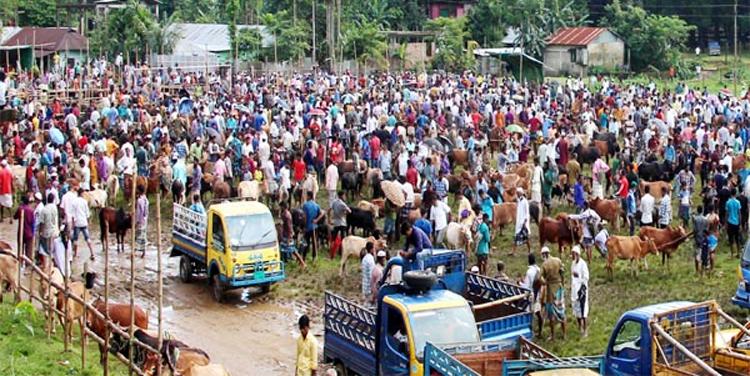 স্বাস্থ্যবিধি উপেক্ষিত : জৈন্তাপুরে গরুর বাজারে ভিড়, দাম হাতের নাগালে