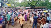 ছাতকের লকডাউন উপেক্ষা করে জাউয়াবাজারে জমজমাট পশুর হাট